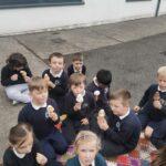 Ms. O' Callaghan's Junior/Senior Infants